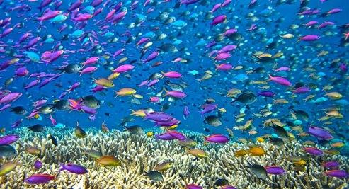 Ecosistema-acuatico-4